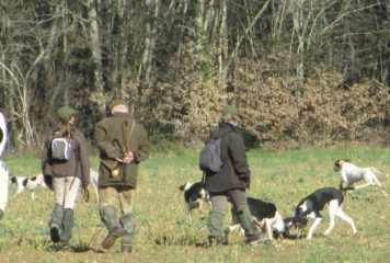 Chasse à courre: le lièvre a distancé les chiens